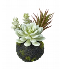 Succulent Mix Dusky Green