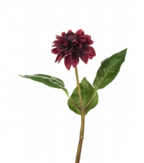 Dahlia Stem Damson Red