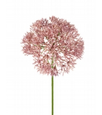 Angelica Stem Deep Blush