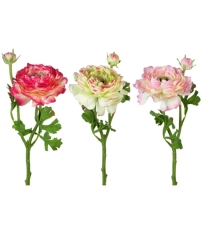 Ranunculus Stem Green & Pink - 3 Assorted
