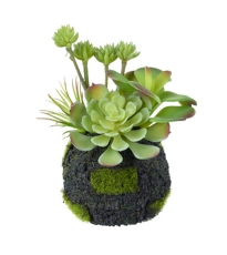 Succulent Mix Green