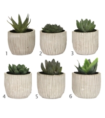 Mini Succulent Pot - 6 Assorted