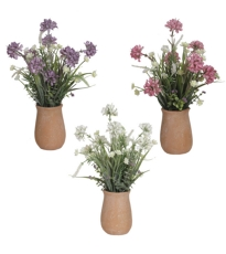 Mixed Meadow Pot 3 Assorted