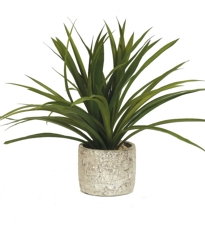 Potted Leafy Plant